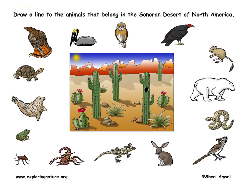 Habitat for Animal Worksheets submited images.