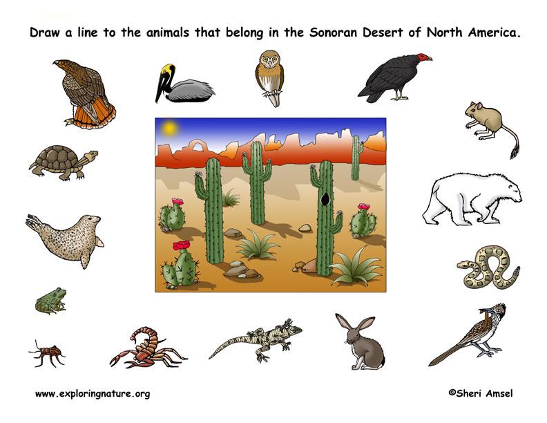 desert habitat game