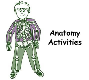 Anatomy short answer questions