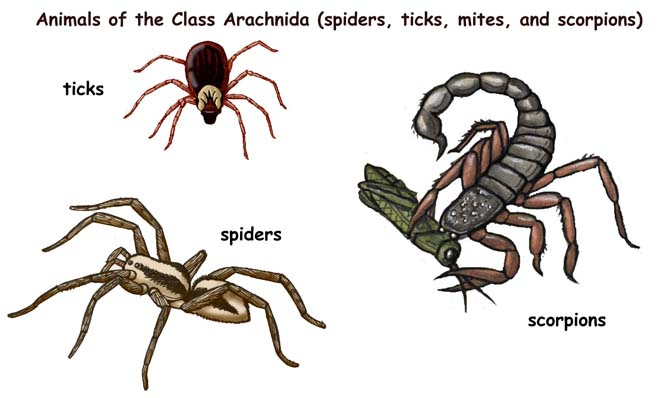 ABOUT SPIDERS AND THEIR KIN