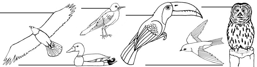 Bird Labeling Pages