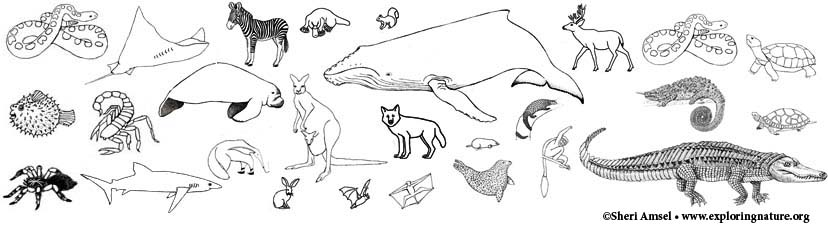 Animal Group Coloring Pages
