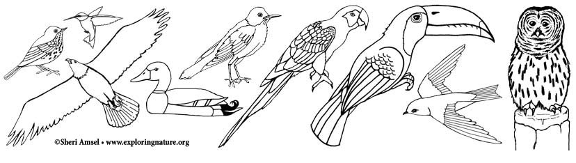 Winter Birds coloring page | Free Printable Coloring Pages | 234x828