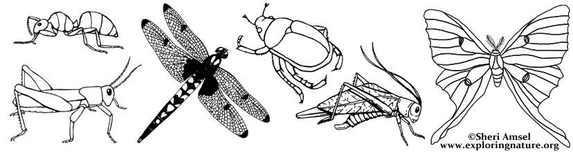 insect coloring pages - Insect Coloring Pages