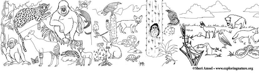 Habitats And Seasons Coloring Pages