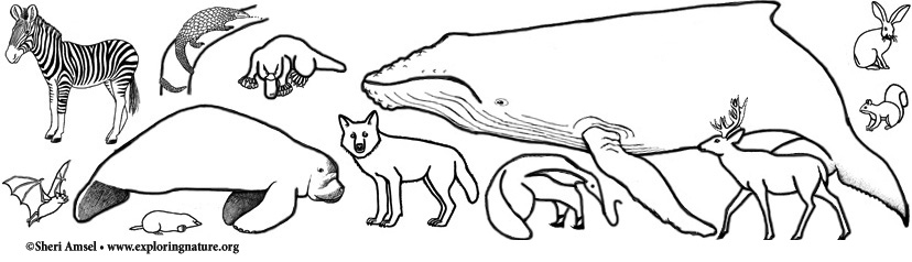 Mammal Coloring Pages Index