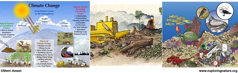 Environmental Issues Activities
