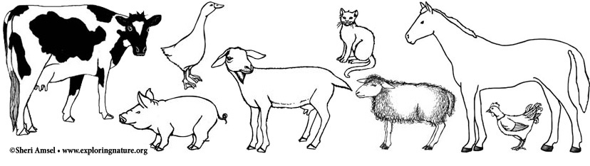 Farm Animals Pets and Gardens Coloring Pages