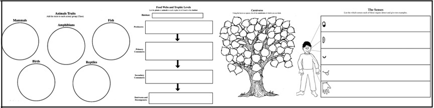 Graphic Organizer - Biomes