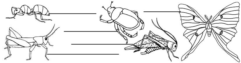 Insect Labeling Pages