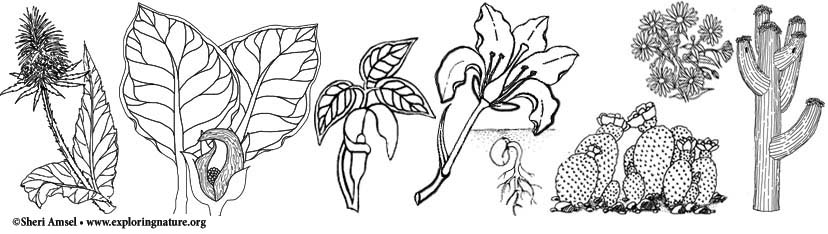 Plants Plant Science And Wildflowers Coloring Pages