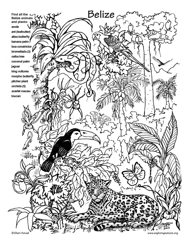 Rainforest Coloring Pages For Adults : Belize rainforest hidden picture and coloring page