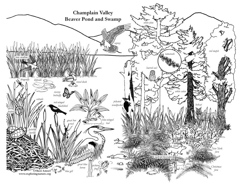 Amazon river coloring page