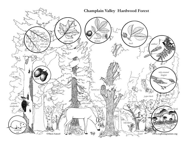 Champlain Valley, Adirondack Mountains, NY State