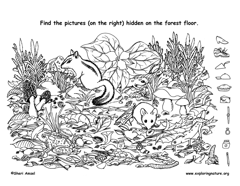 Forest floor hidden picture for Coloring pages for adults with hidden objects