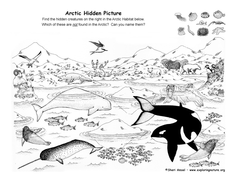 Science Coloring Pages Food Web