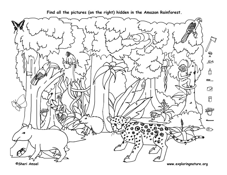 Hidden Animals Coloring Pages : View