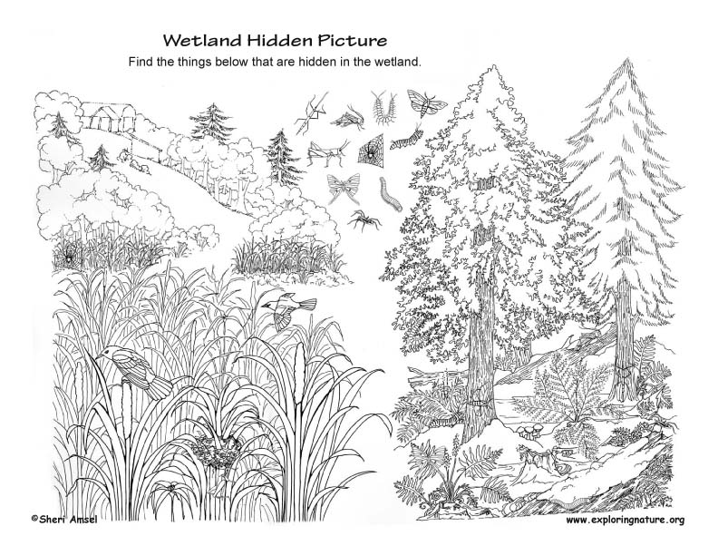 Wetlands Hidden Picture