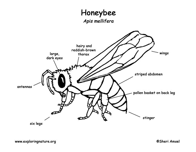 Label Insect Diagram