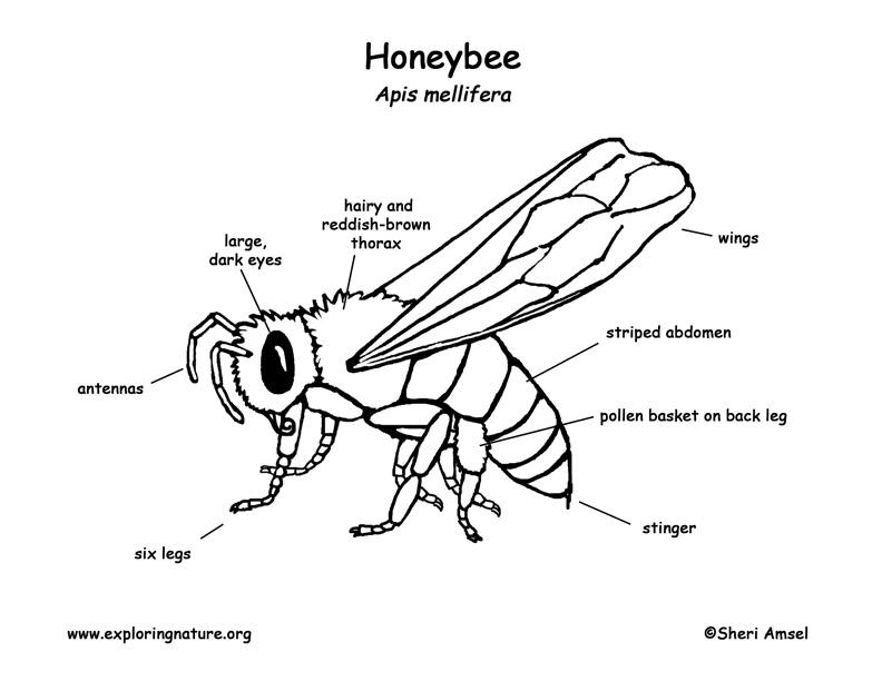 Honey Dew Bee Style Guide By Anna Hancq Issuu