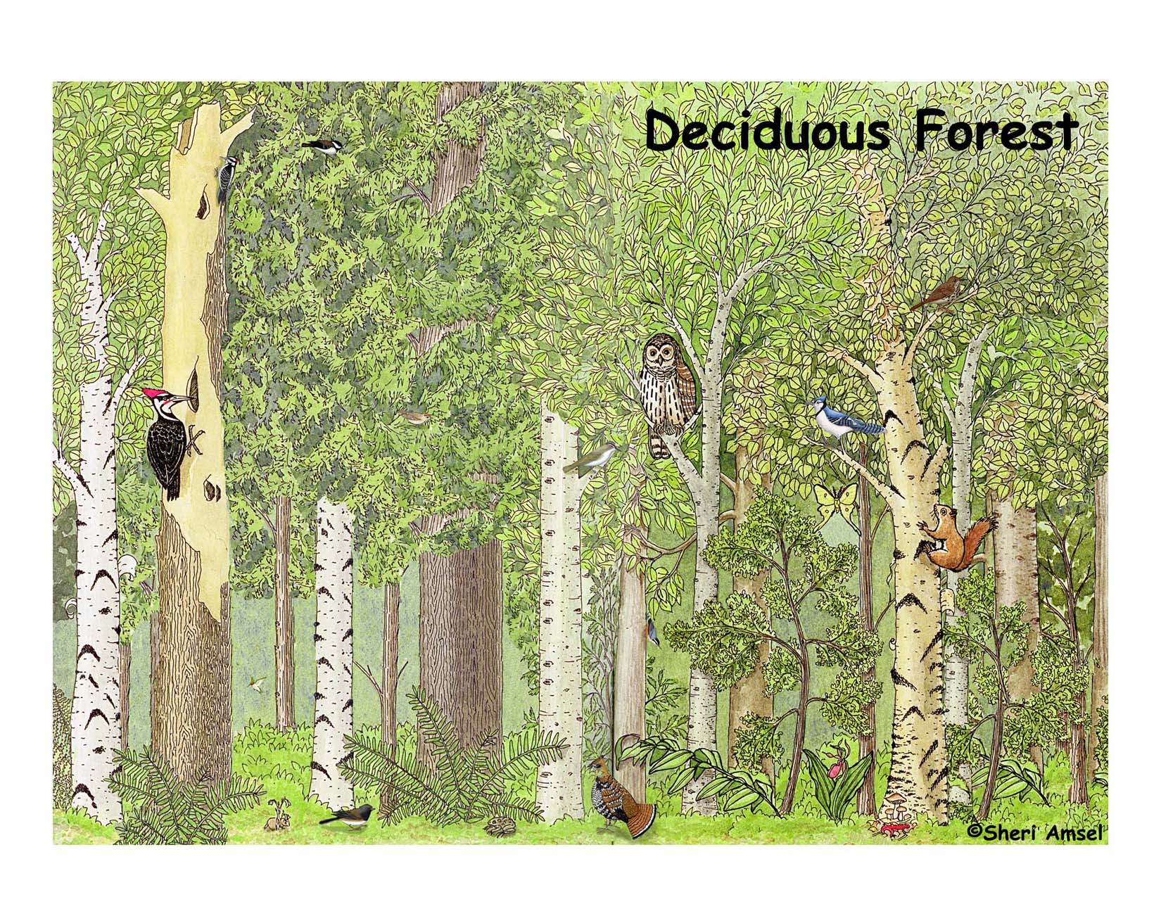 Decidous Forest Free Coloring