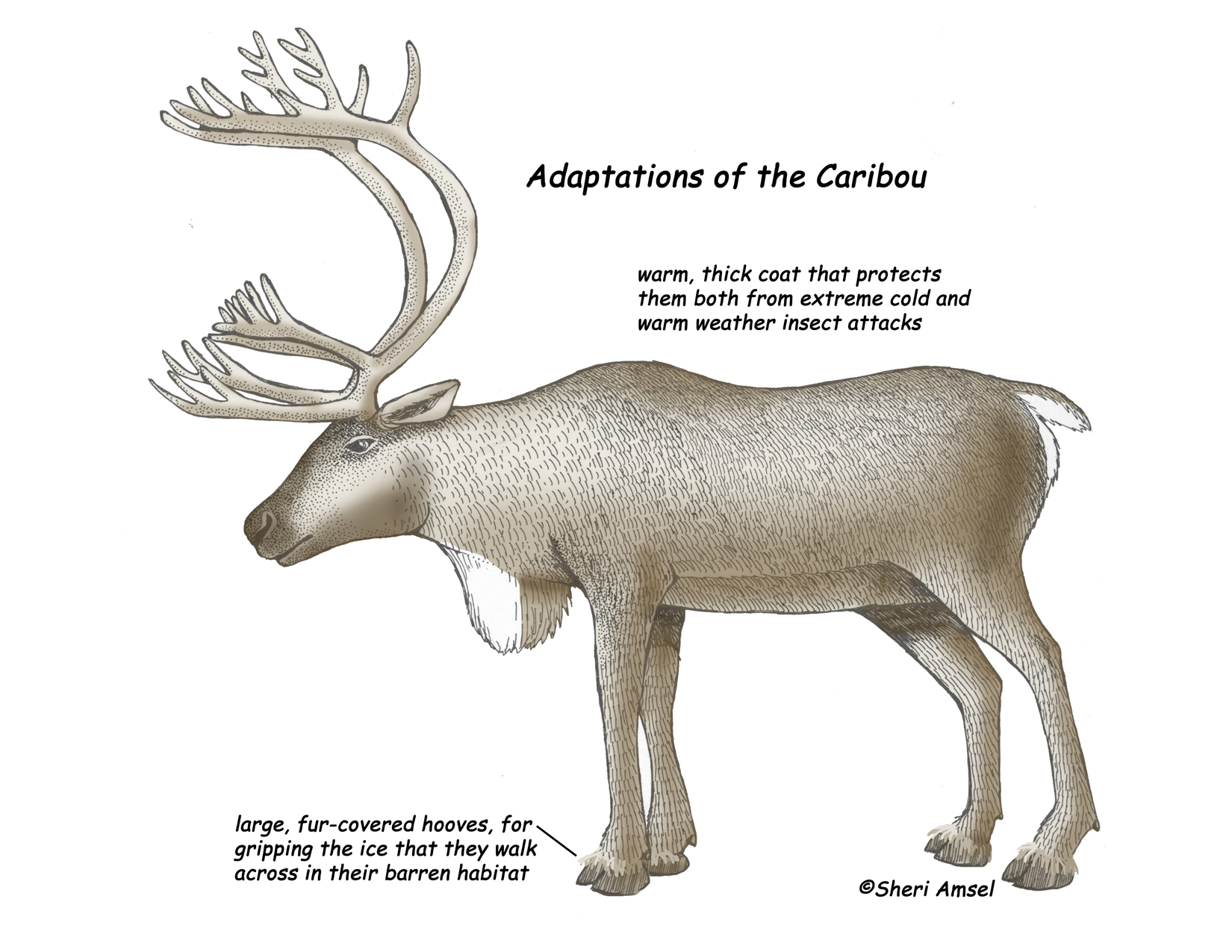 Image Gallery reindeer adaptations