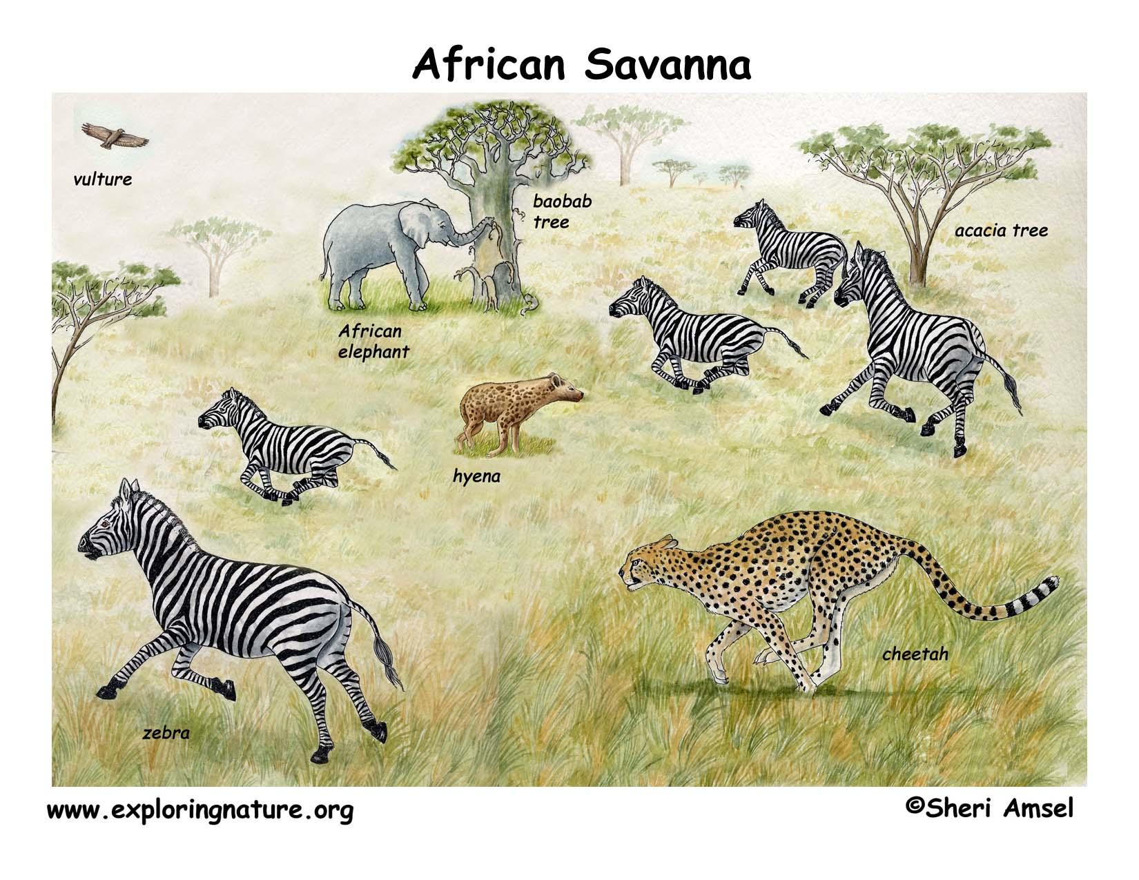 The African Veldt and Savannah