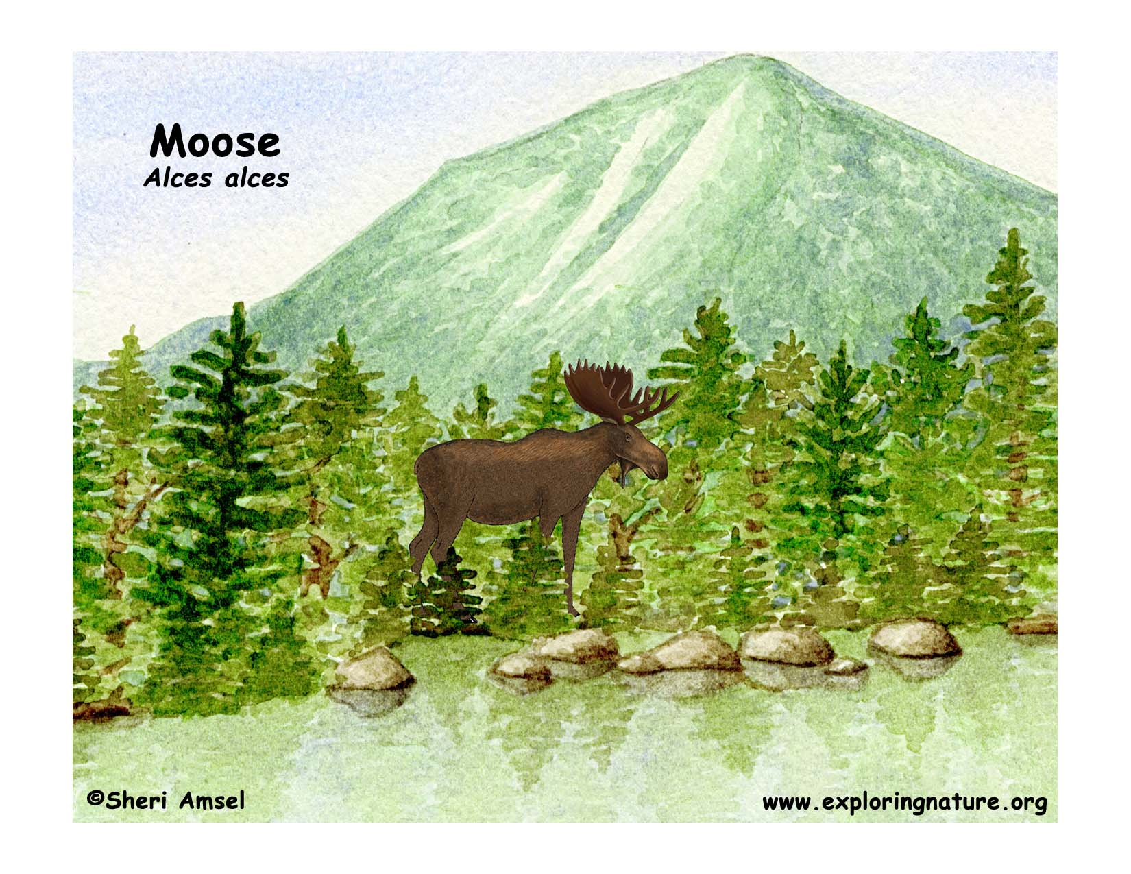 moose_inhabitat.jpg