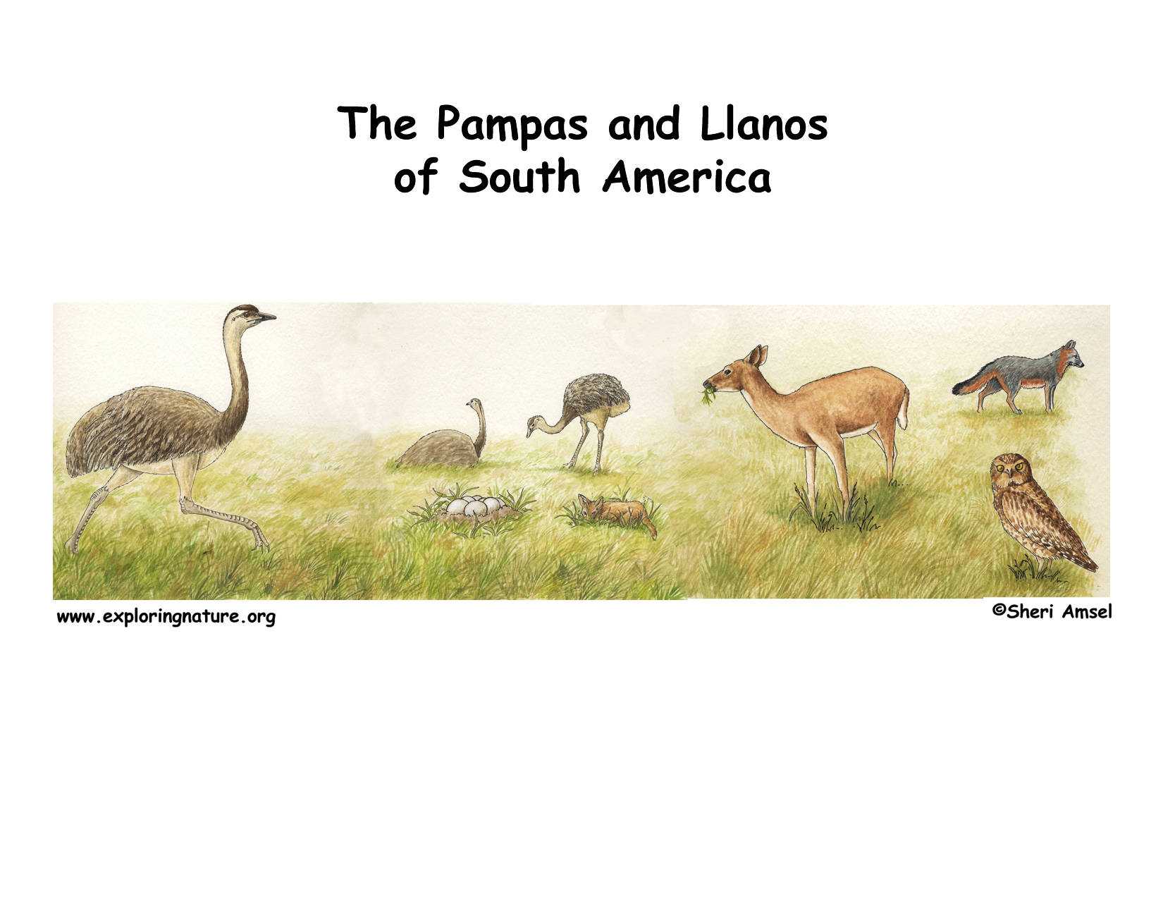 pampas of south america