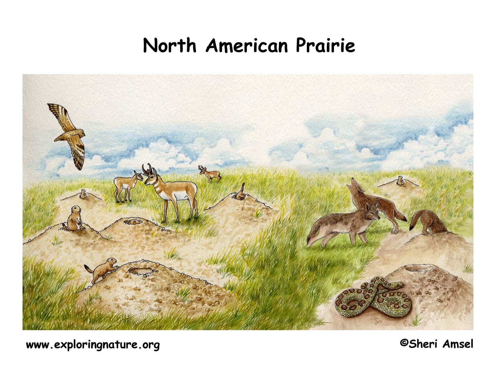 Grassland animals and plants food web - photo#14