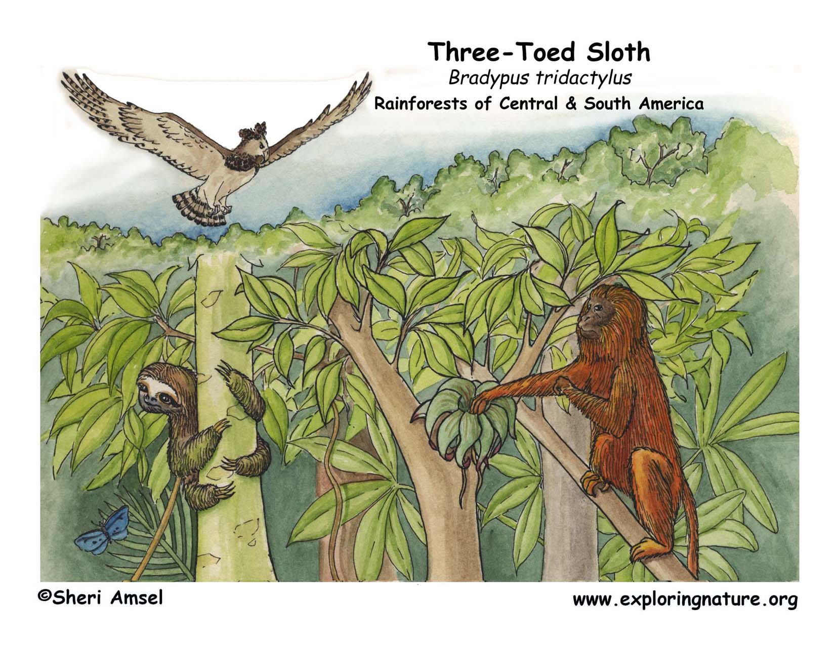 sloth  three