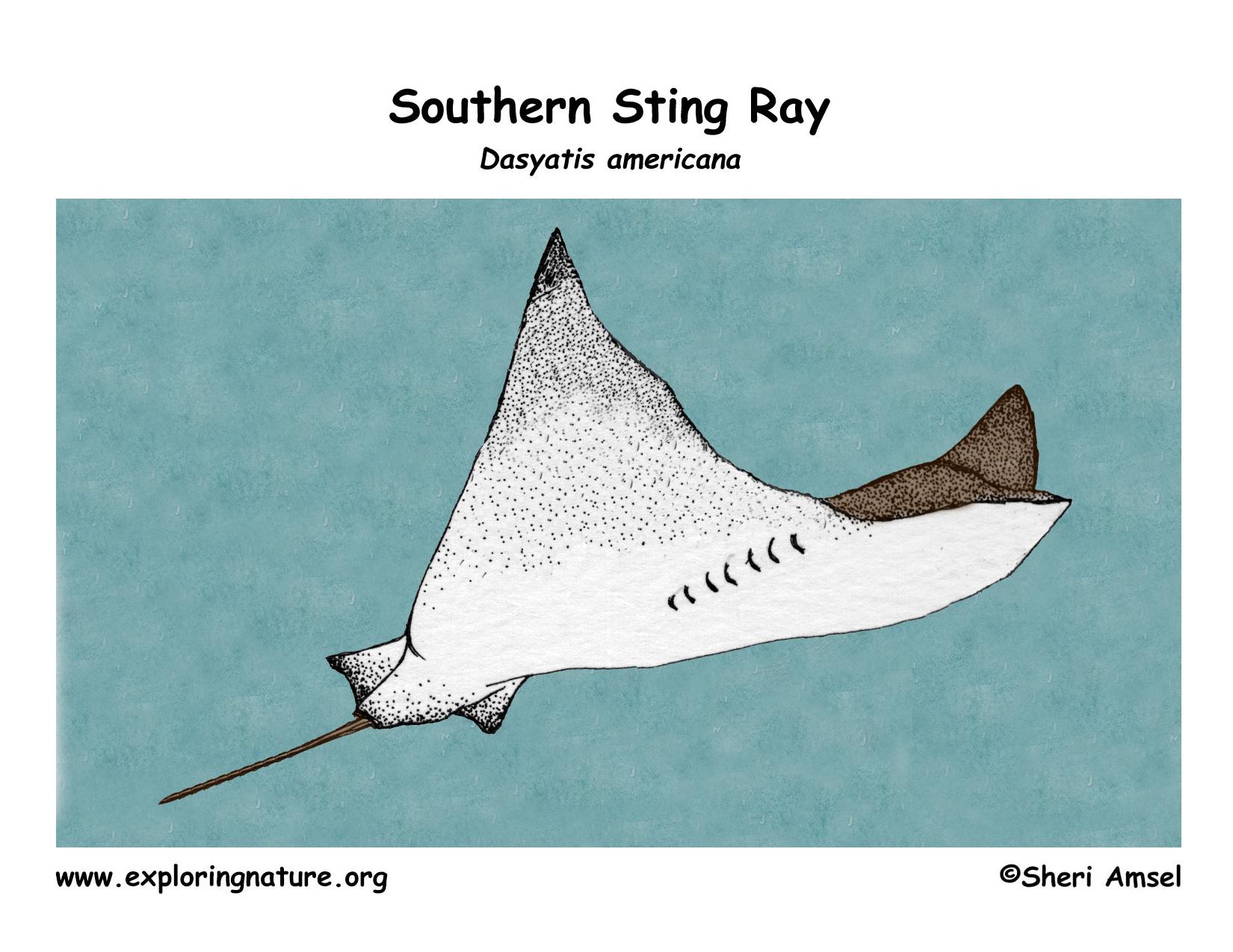 Stingray (Southern)