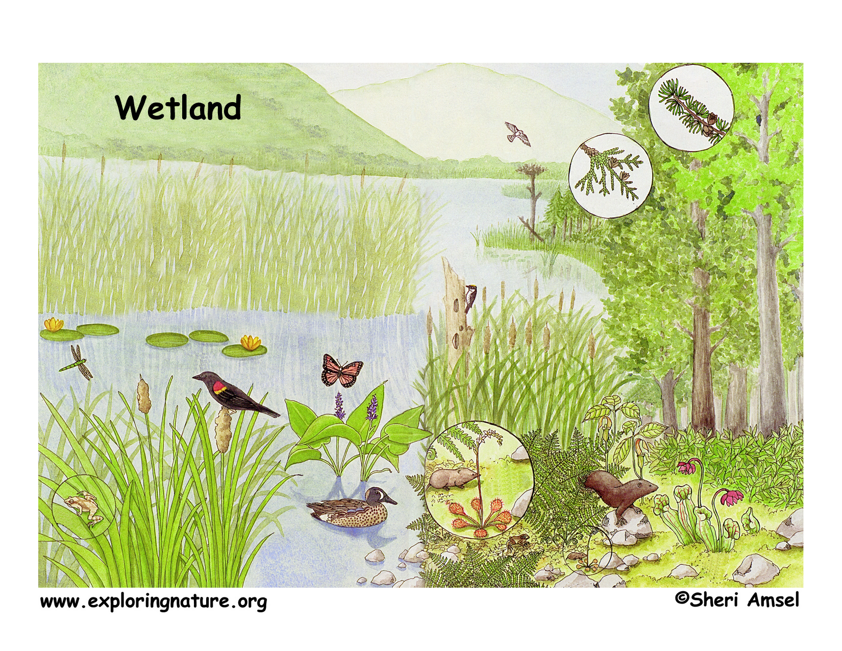 Download hi res wetland poster
