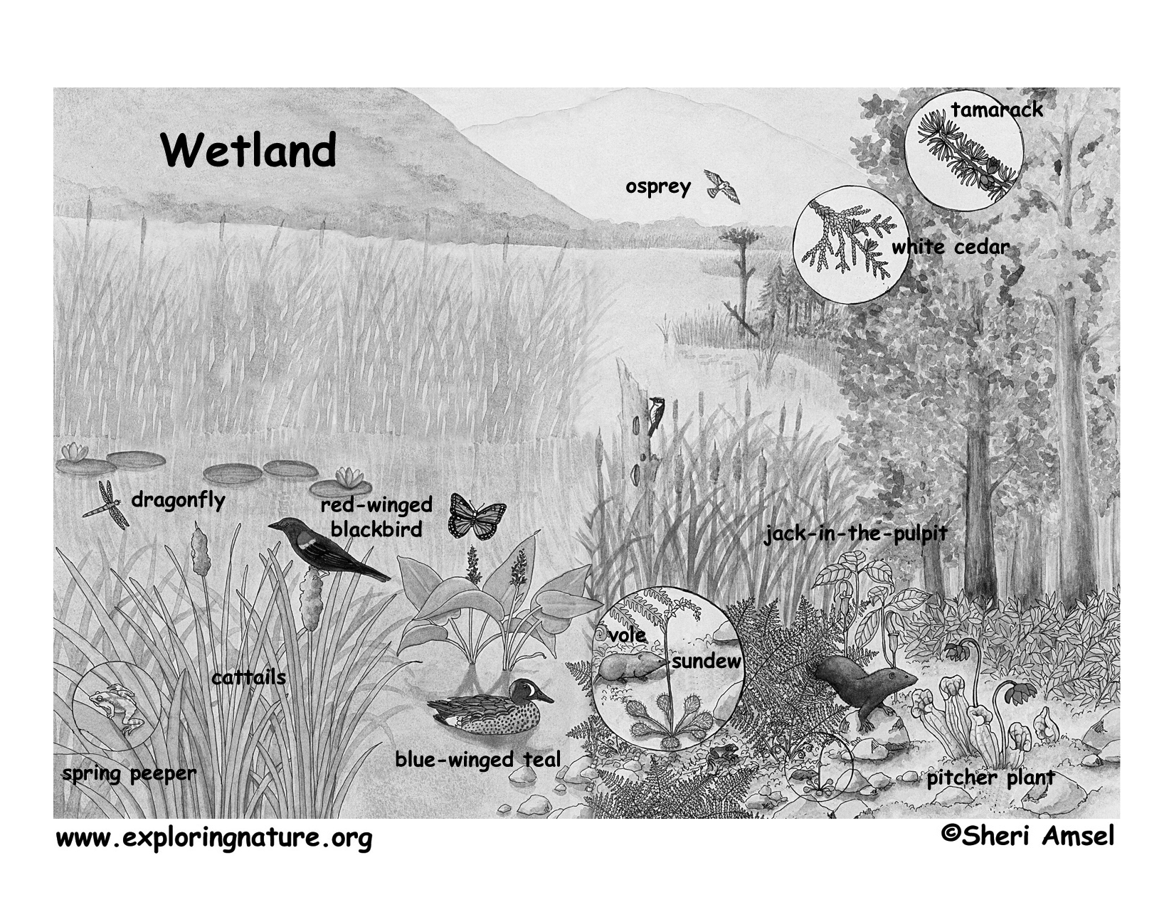 marsh test diagram marsh diagram marshes swamps and bogs