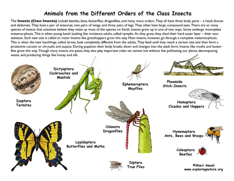 Class - Insects (4th Grade and Up)