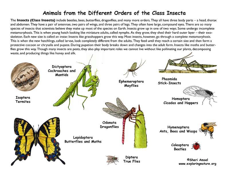 Information about insects bewerbung online korrigieren lassen