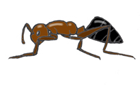 Ant Activities - Reading, Drawing and Inquiry