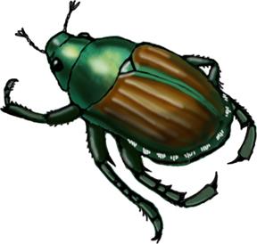 Beetle (Japanese)