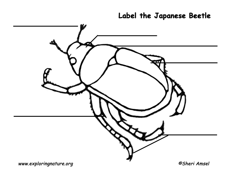 Japanese Beetle Labeling Page