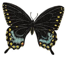 Butterfly (Spicebush Swallowtail)