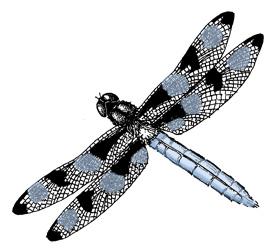 Dragonfly (Twelve-spot Skimmer)
