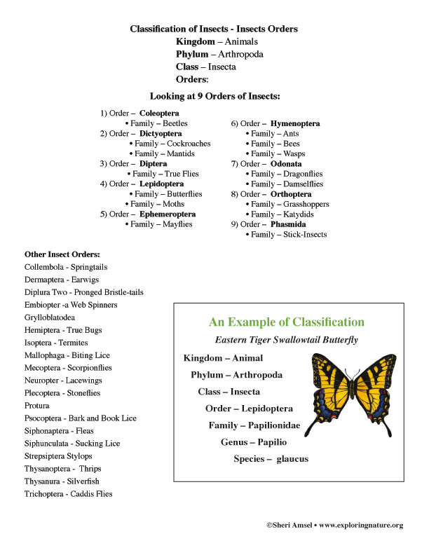insect orders list only  grade 3