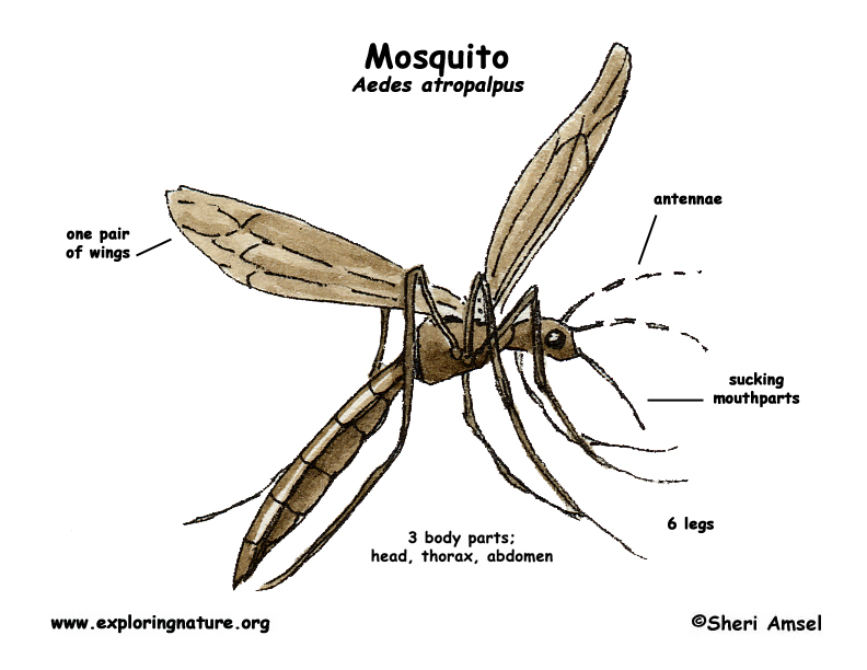 diagram of price elasticity of demand diagram of mosquito mosquito patties : wtf