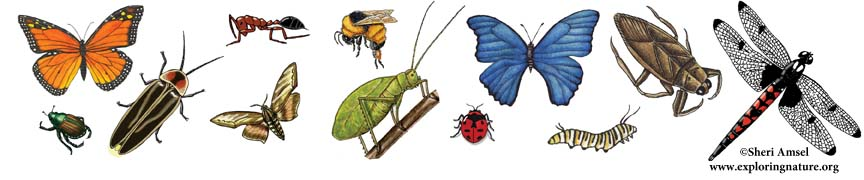 Insects header, learn about insects