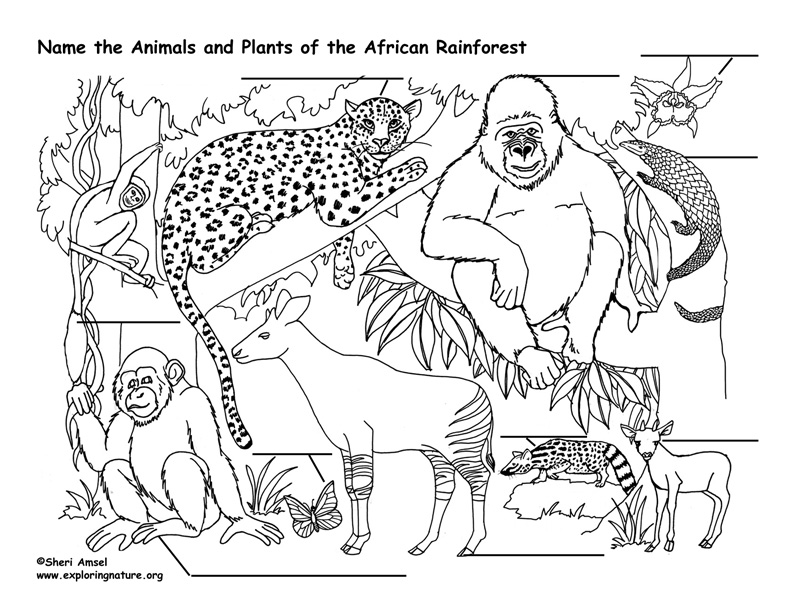 African Rainforest Animals Labeling