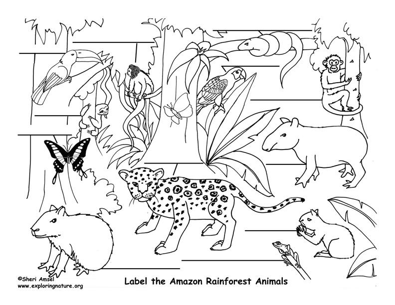 amazon rainforest coloring pages - amazon rainforest animals labeling exploring nature