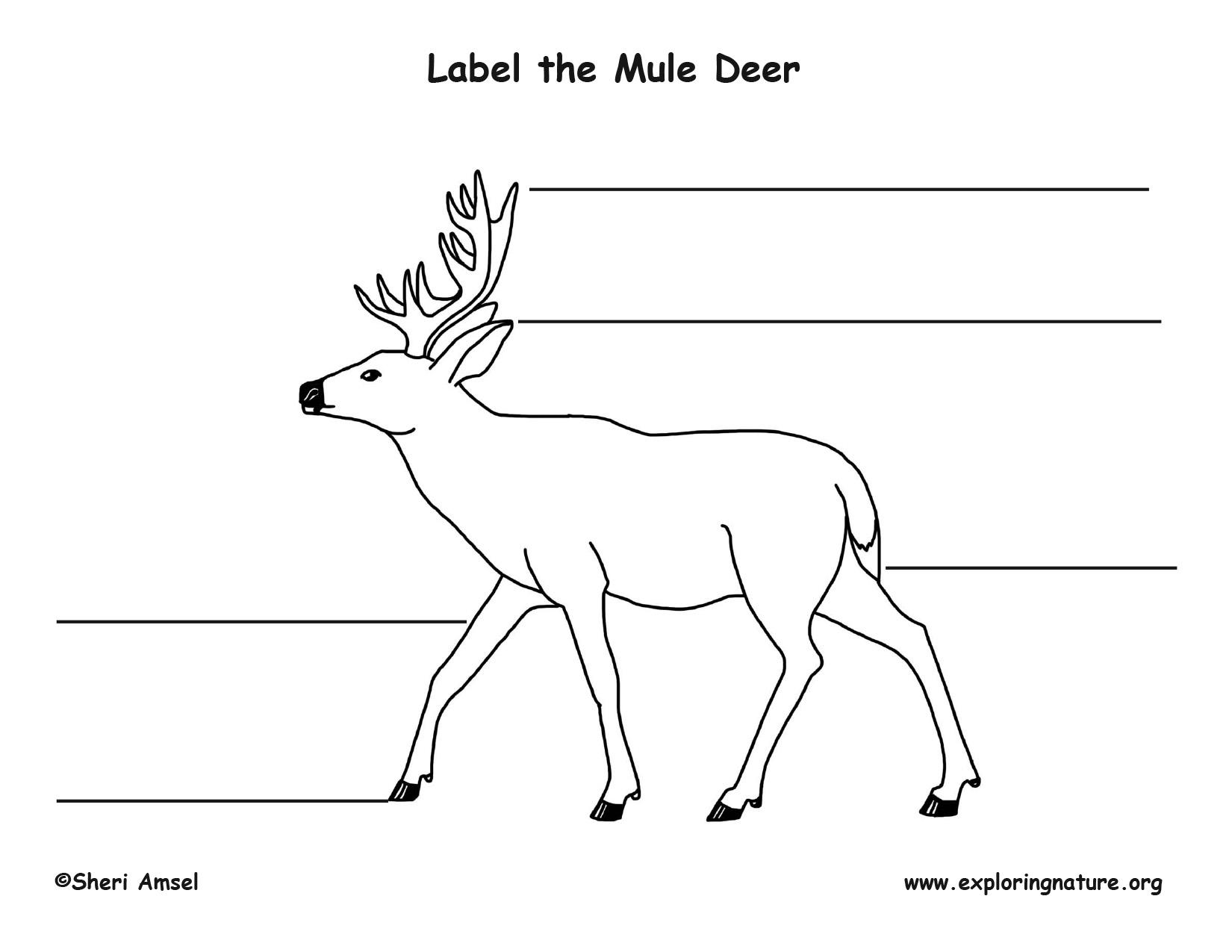 Mule Deer Labeling Page