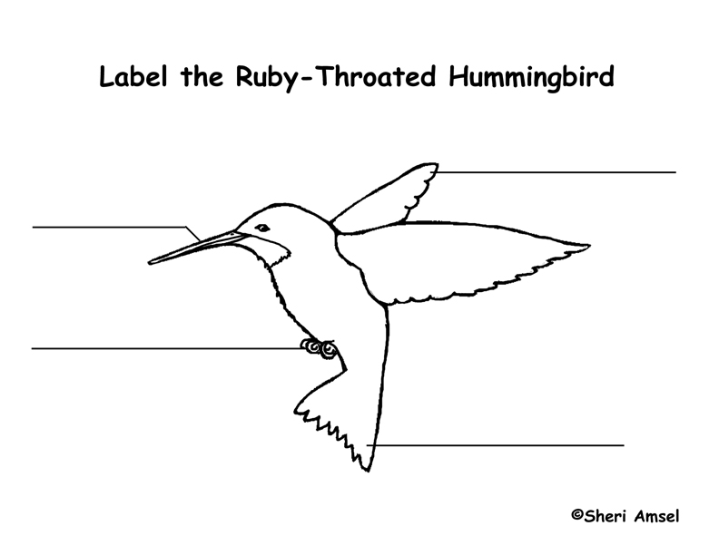 Hummingbird Labeling Page
