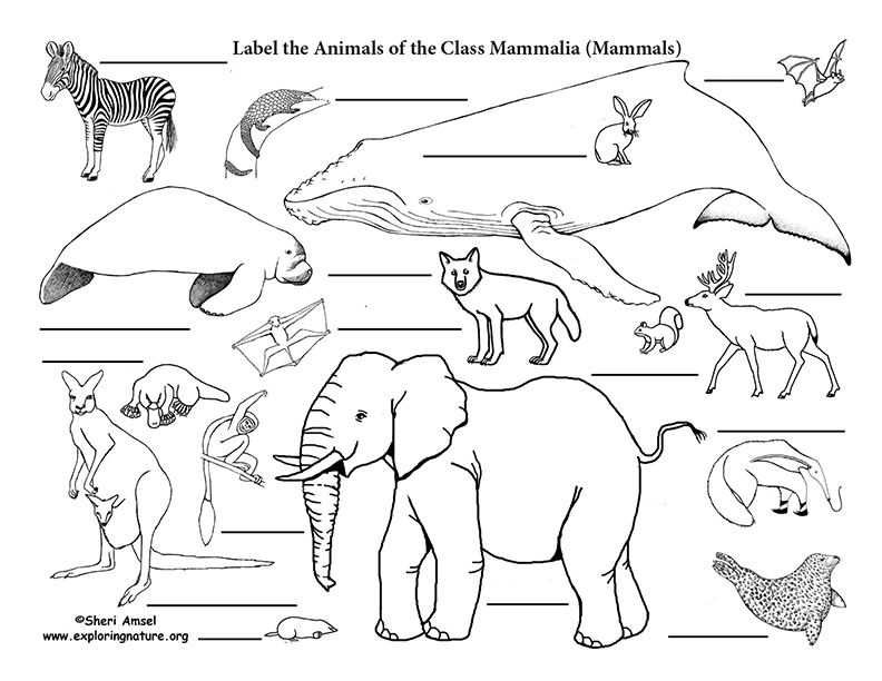 Mammals Labeling Page