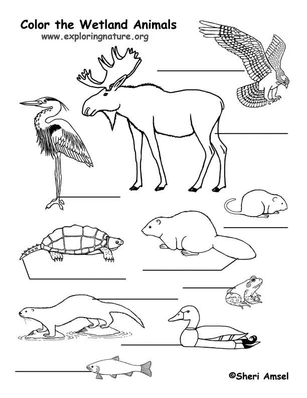 Marsh Animals Labeling Page